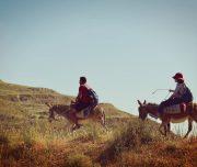 Sebastia-Donkey-Tours-Palestine_(11)