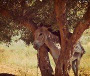 Sebastia-Donkey-Tours-Palestine_(13)