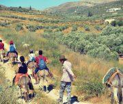 Sebastia-Donkey-Tours-Palestine_(14)