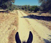 Sebastia-Donkey-Tours-Palestine_(9)