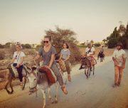 Donkey-tours-jericho-palestine (11)