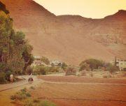 Donkey-tours-jericho-palestine (3)