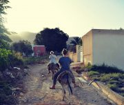 Donkey-tours-jericho-palestine (8)